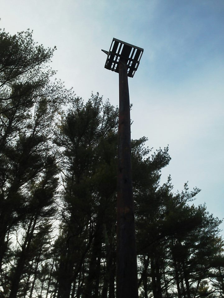 osprey platform in Myles Standish State Forest